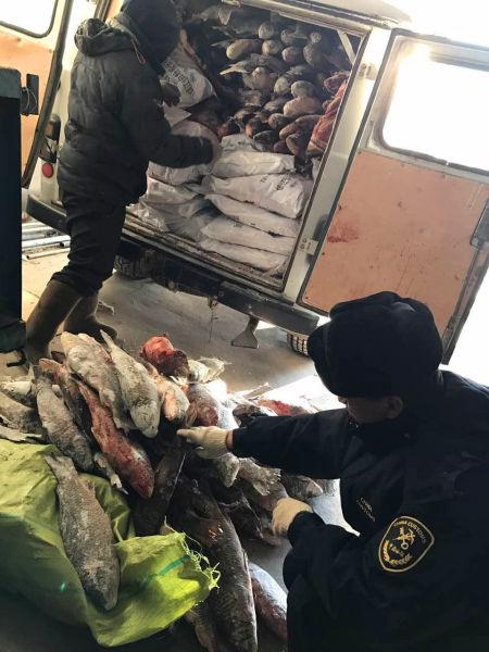 图为满洲里海关关员对夹藏入境的冻鱼和冻肉进行清点称重(李明摄影)