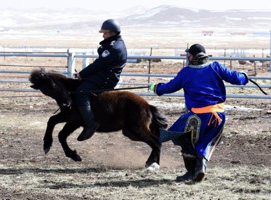 """通訊︰內蒙古馬背警隊戰""""疫""""之後添新成員 警方開啟馴馬節奏(zou)"""